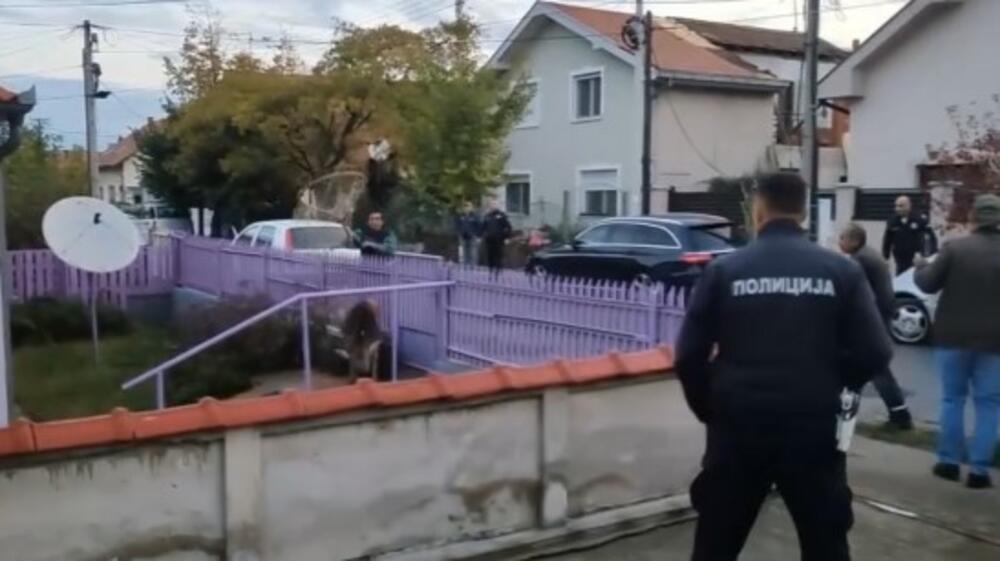 MISTERIJA! POŽAREVAC OD ZORE NA NOGAMA: Otkud jelen u centru grada kad ne žive u okolini?! Uhvaćen posle 4 sata potere (VIDEO)